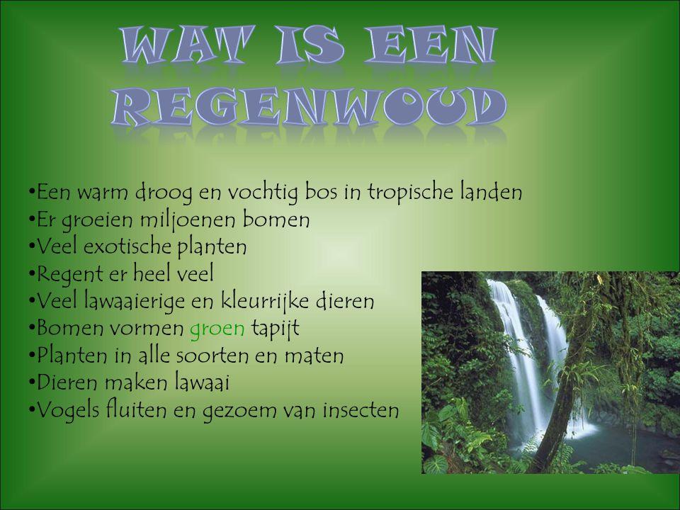 Wat is een regenwoud Een warm droog en vochtig bos in tropische landen