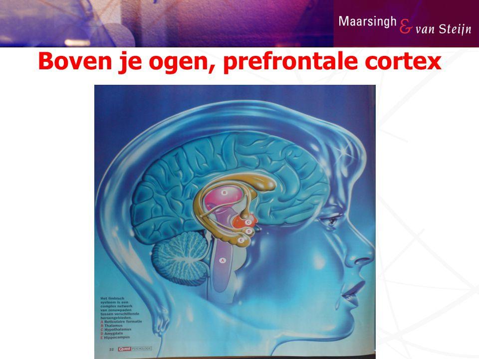 Boven je ogen, prefrontale cortex