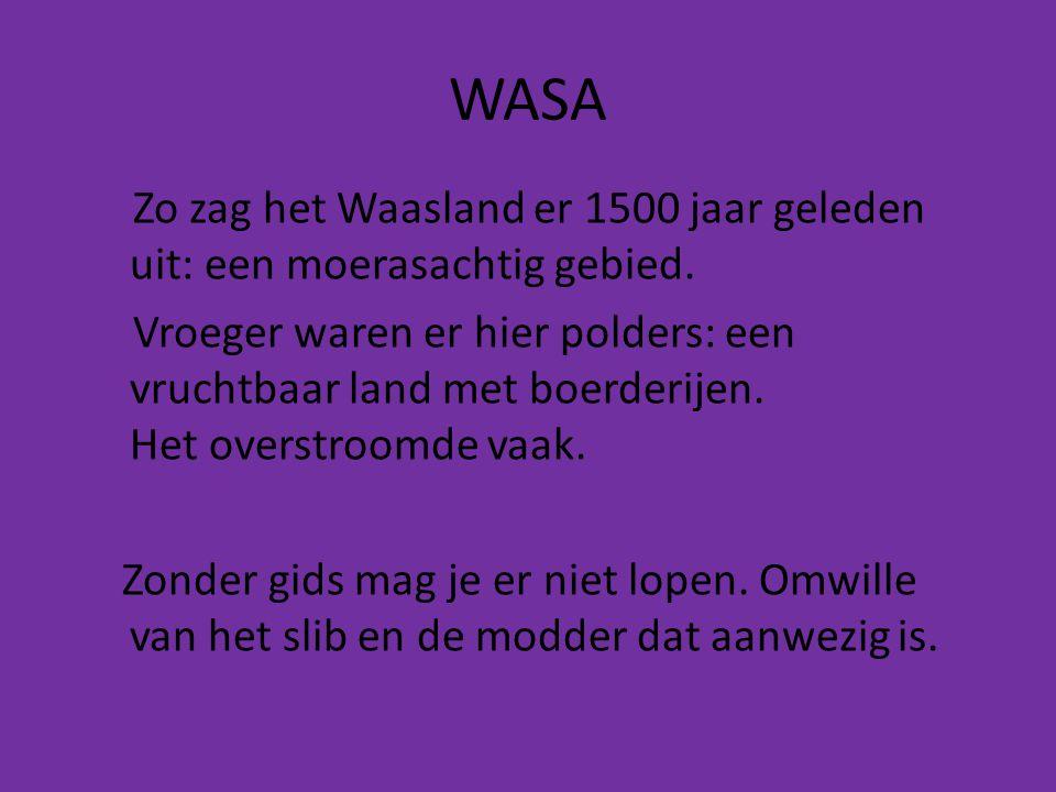 WASA Zo zag het Waasland er 1500 jaar geleden uit: een moerasachtig gebied.