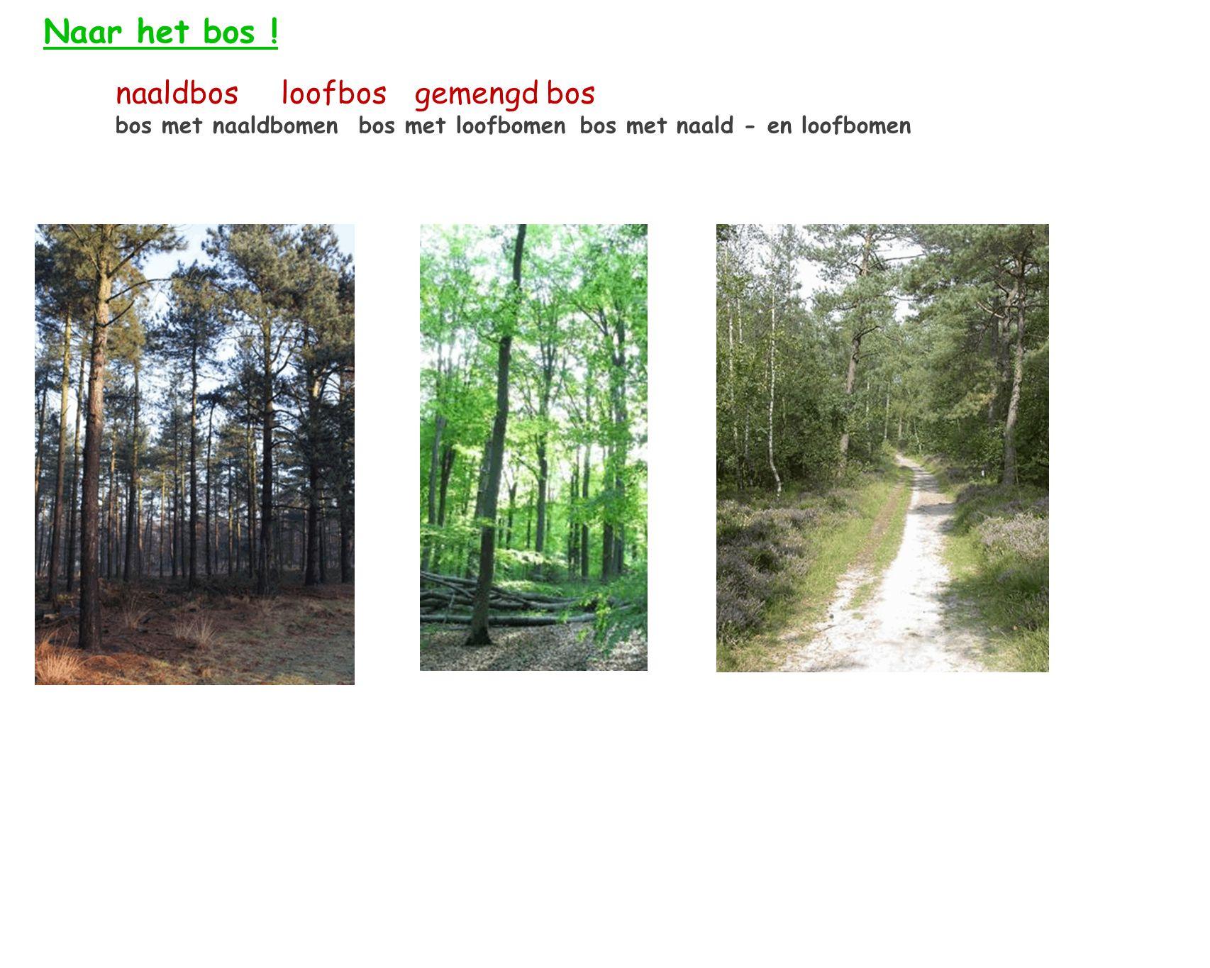 Naar het bos ! naaldbos loofbos gemengd bos