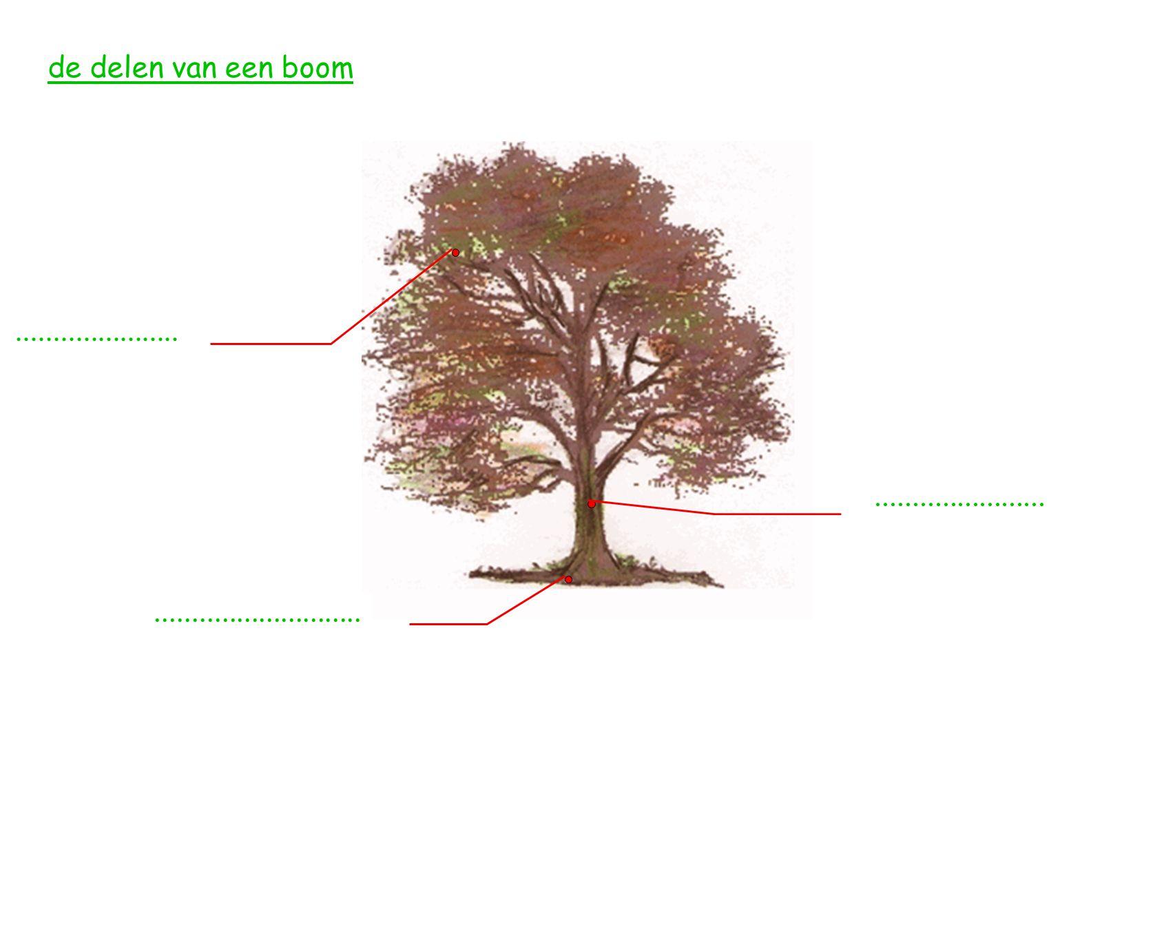de delen van een boom ...................... ....................... ............................