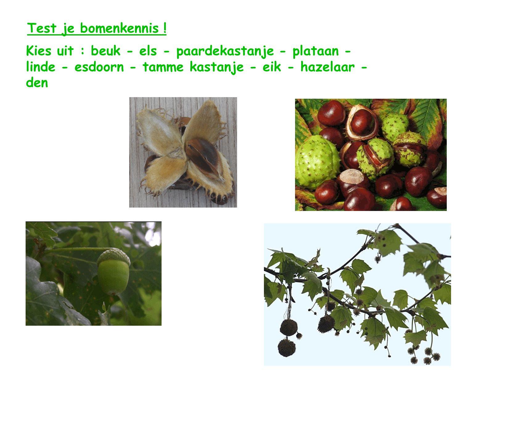 Test je bomenkennis ! Kies uit : beuk - els - paardekastanje - plataan - linde - esdoorn - tamme kastanje - eik - hazelaar -