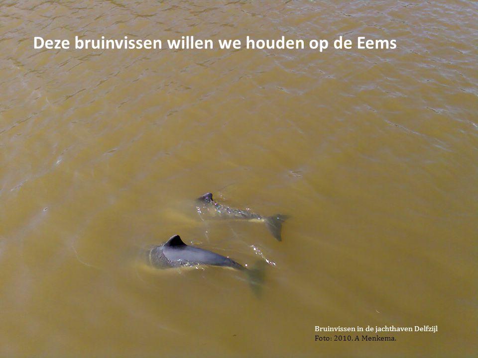 Deze bruinvissen willen we houden op de Eems