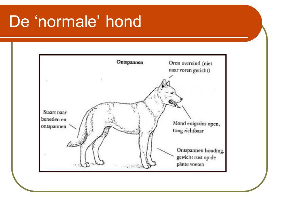 De 'normale' hond Deze hond wordt ook wel de sociale hond genoemd.