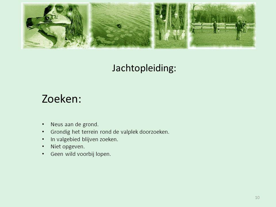 Inschrijfavond Zoeken: Jachtopleiding: Neus aan de grond.