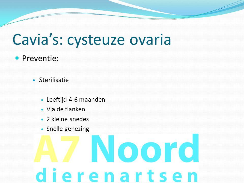 Cavia's: cysteuze ovaria