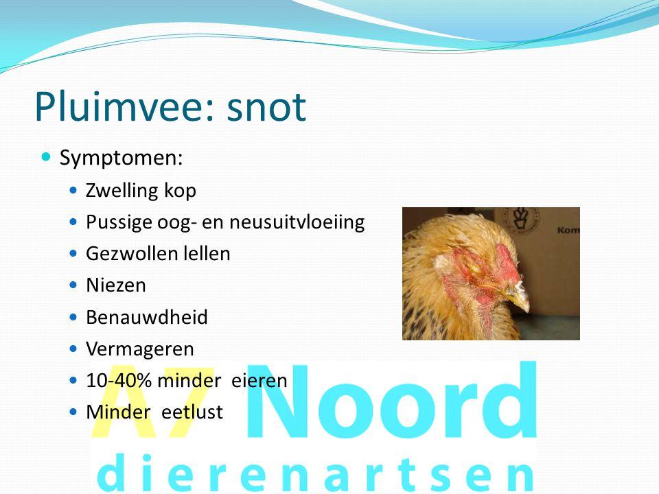 Pluimvee: snot Symptomen: Zwelling kop Pussige oog- en neusuitvloeiing