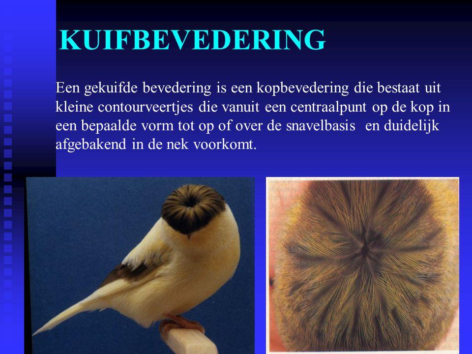 KUIFBEVEDERING Een gekuifde bevedering is een kopbevedering die bestaat uit. kleine contourveertjes die vanuit een centraalpunt op de kop in.