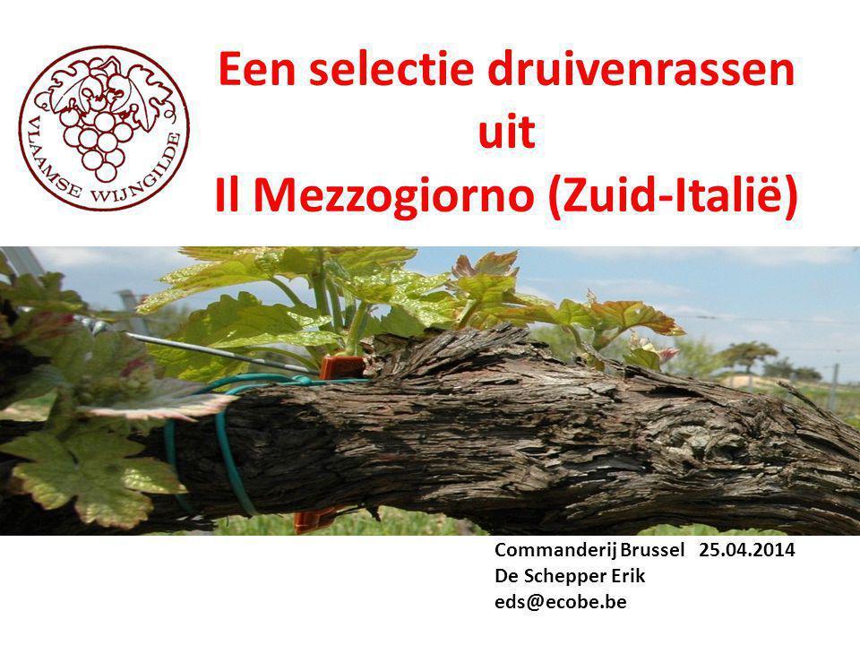 Een selectie druivenrassen Il Mezzogiorno (Zuid-Italië)