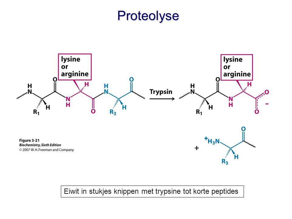 Proteolyse Eiwit in stukjes knippen met trypsine tot korte peptides