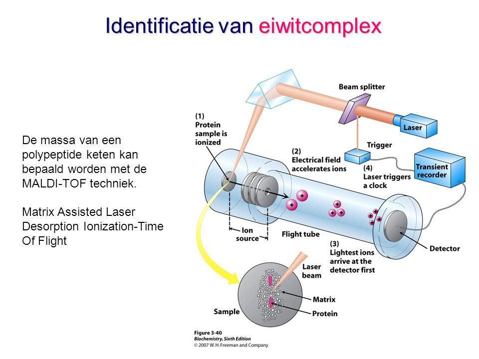 Identificatie van eiwitcomplex