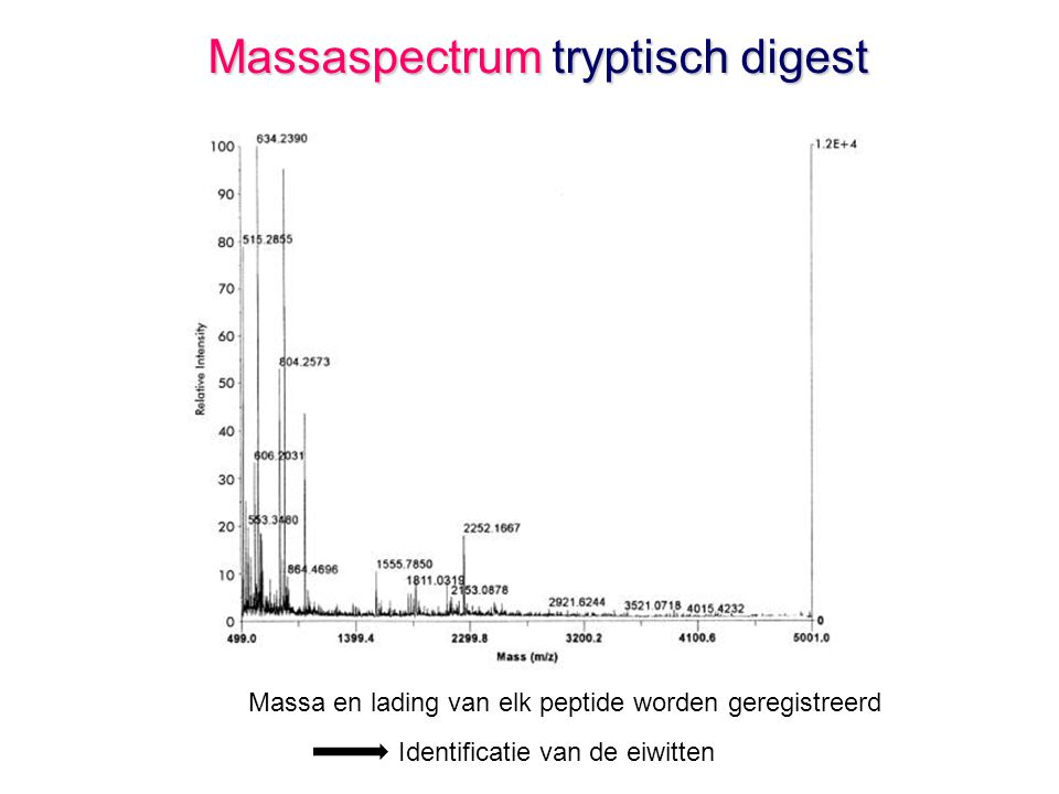 Massaspectrum tryptisch digest