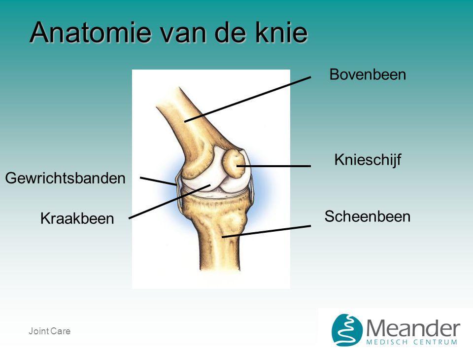 Anatomie van de knie Bovenbeen Knieschijf Scheenbeen Gewrichtsbanden