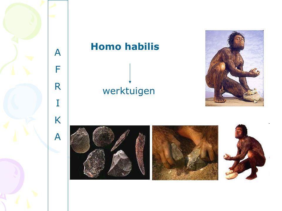 A F R I K Homo habilis werktuigen