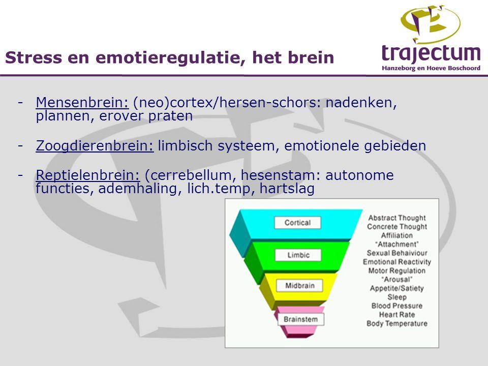 Stress en emotieregulatie, het brein