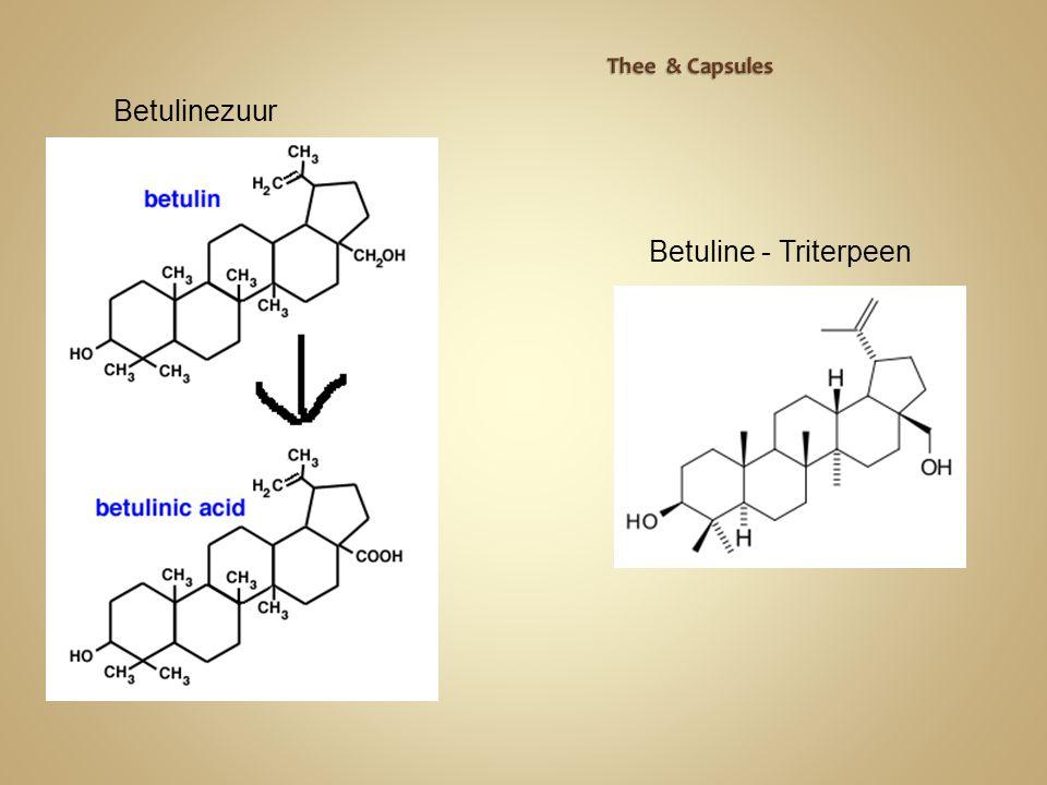 Thee & Capsules Betulinezuur Betuline - Triterpeen