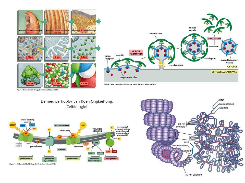 De nieuwe hobby van Koen Ongkiehong: Celbiologie!