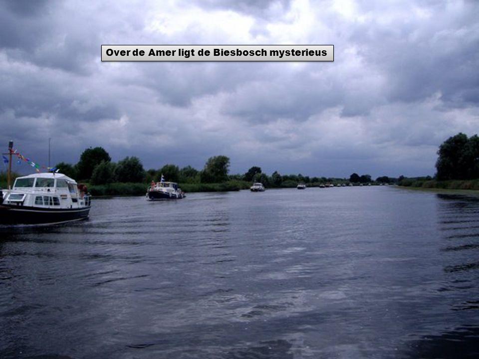 Over de Amer ligt de Biesbosch mysterieus