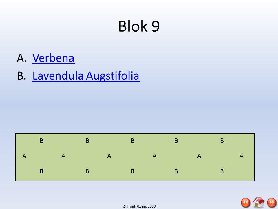 Blok 9 Verbena Lavendula Augstifolia B B B B B A A A A A A B B B B B