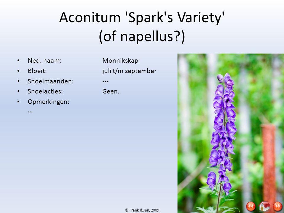 Aconitum Spark s Variety (of napellus )
