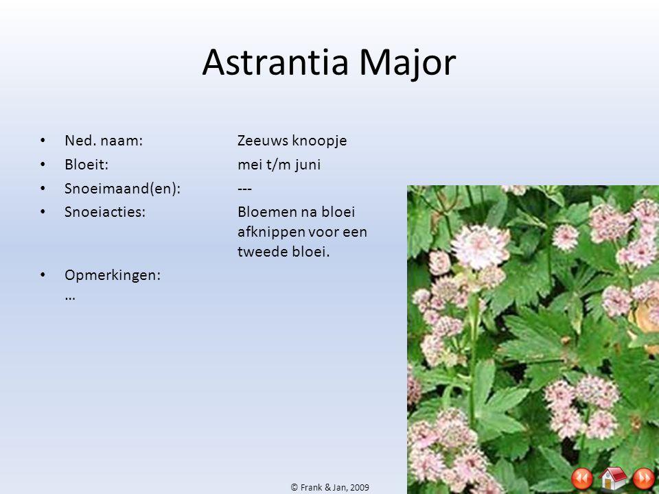 Astrantia Major Ned. naam: Zeeuws knoopje Bloeit: mei t/m juni