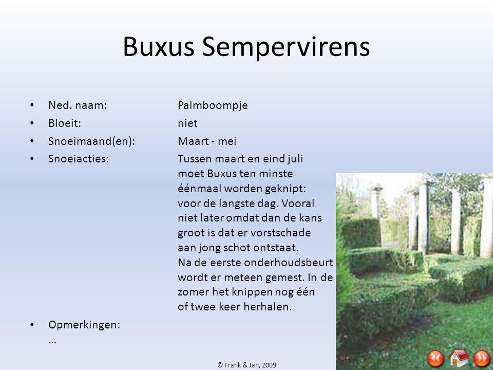 Buxus Sempervirens Ned. naam: Palmboompje Bloeit: niet