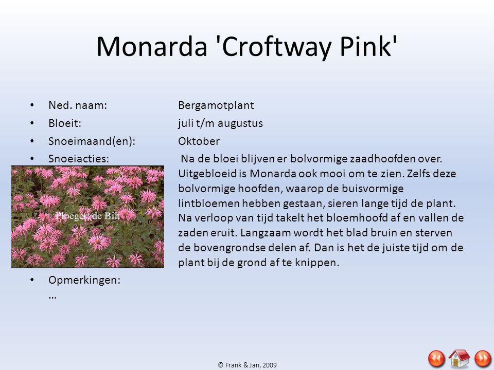 Monarda Croftway Pink Ned. naam: Bergamotplant