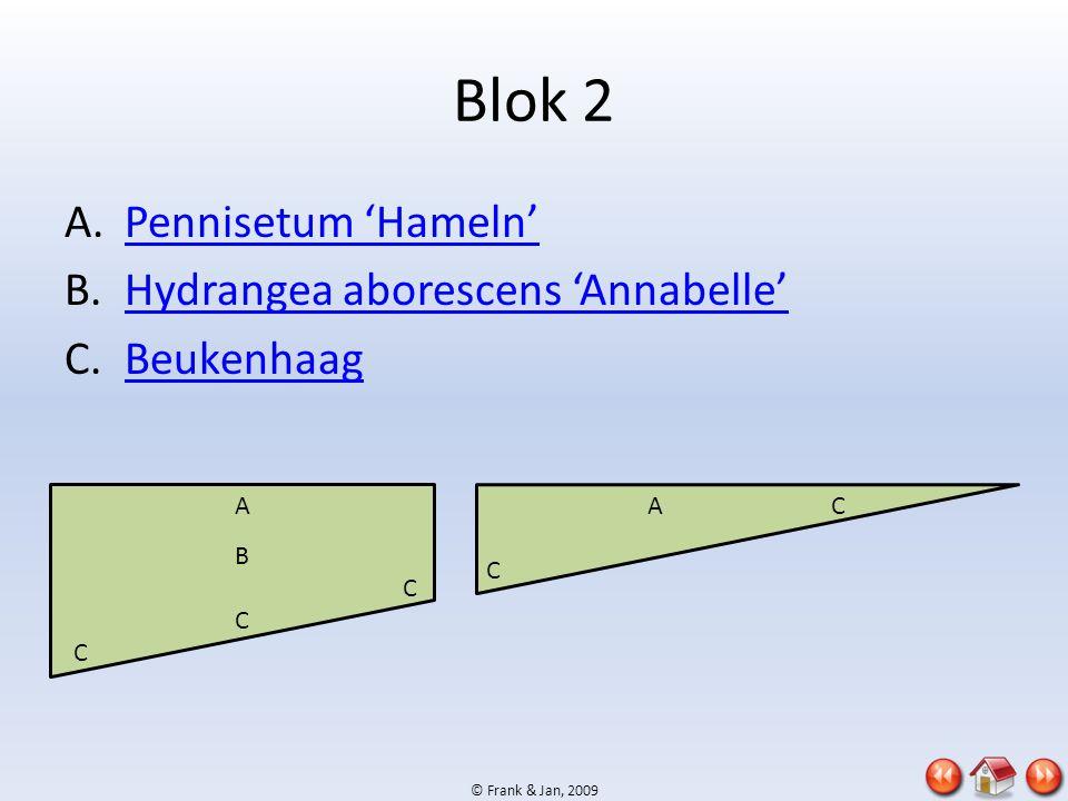 Blok 2 Pennisetum 'Hameln' Hydrangea aborescens 'Annabelle' Beukenhaag