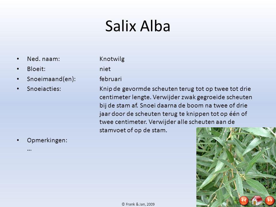 Salix Alba Ned. naam: Knotwilg Bloeit: niet Snoeimaand(en): februari
