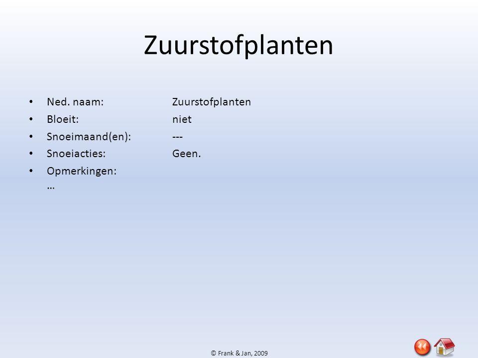 Zuurstofplanten Ned. naam: Zuurstofplanten Bloeit: niet