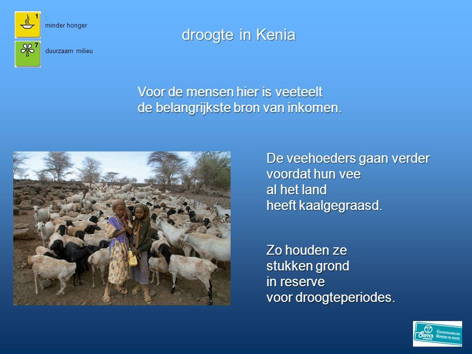 droogte in Kenia Voor de mensen hier is veeteelt