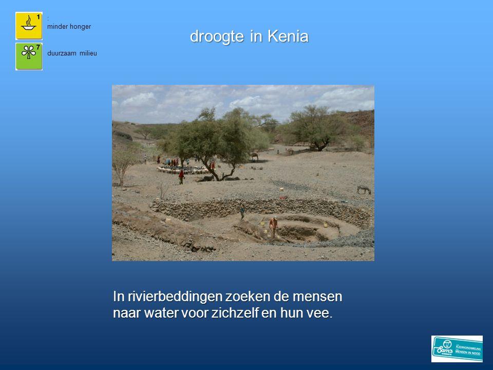droogte in Kenia In rivierbeddingen zoeken de mensen