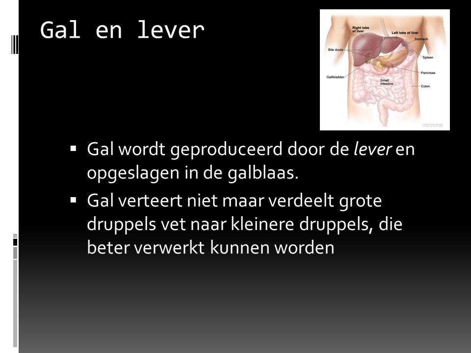 Gal en lever Gal wordt geproduceerd door de lever en opgeslagen in de galblaas.