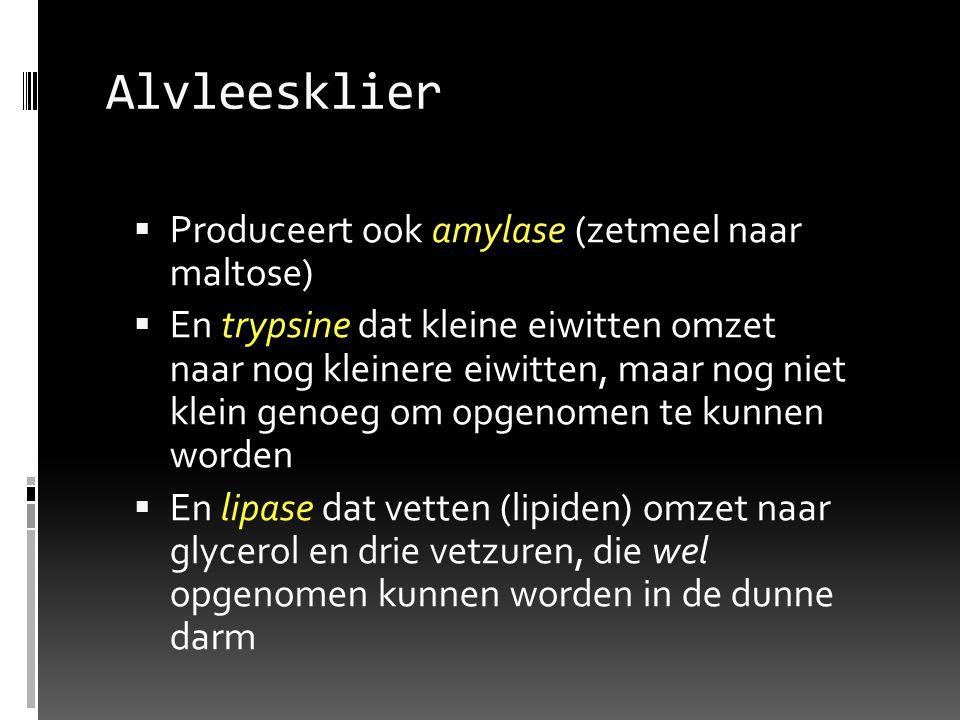Alvleesklier Produceert ook amylase (zetmeel naar maltose)