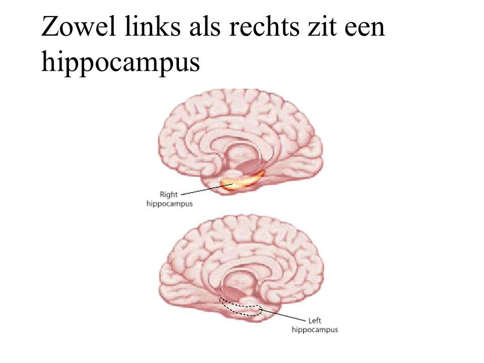 Zowel links als rechts zit een hippocampus