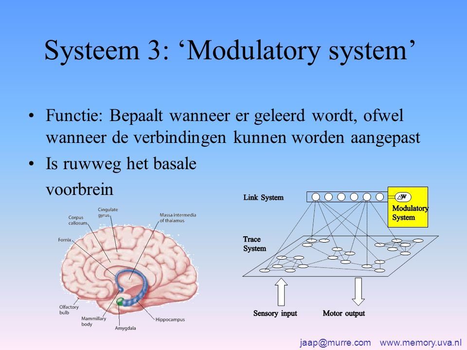 Systeem 3: 'Modulatory system'