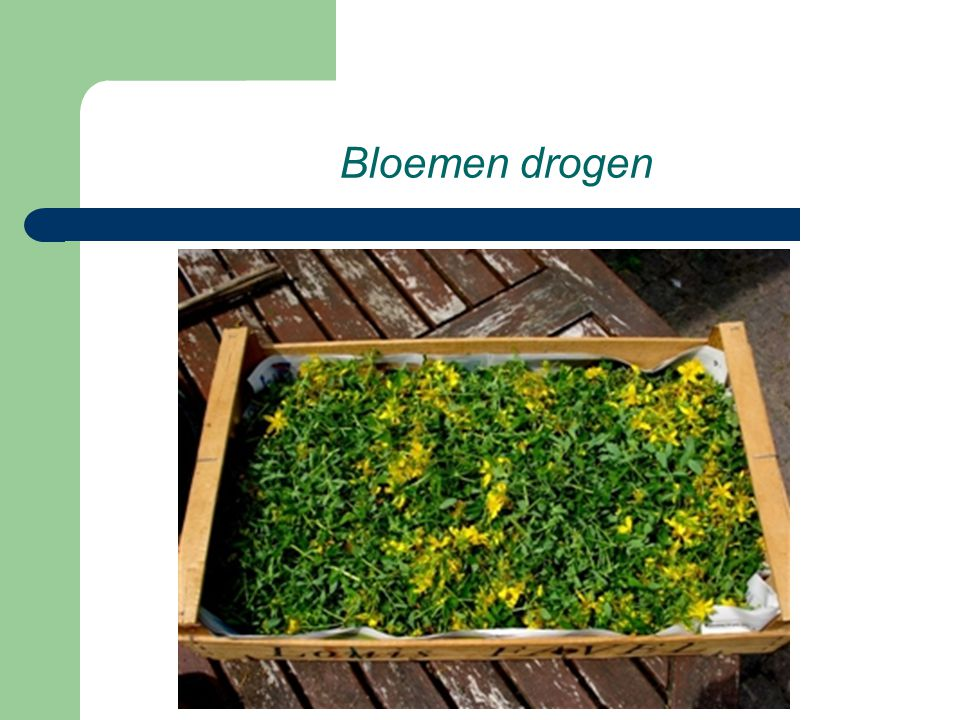 Bloemen drogen