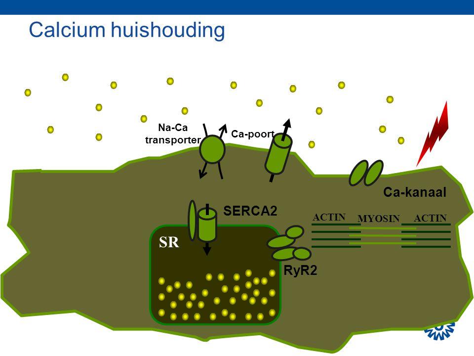 Calcium huishouding SR Ca-kanaal SERCA2 RyR2 Na-Ca transporter