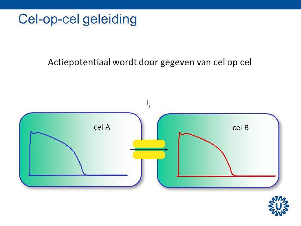 Actiepotentiaal wordt door gegeven van cel op cel