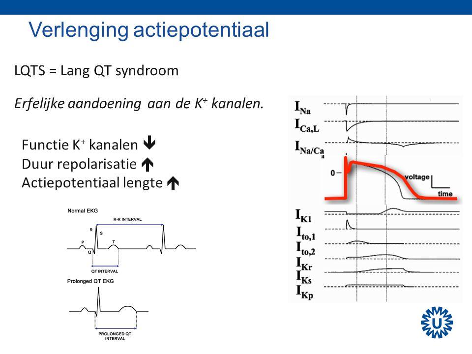 Verlenging actiepotentiaal