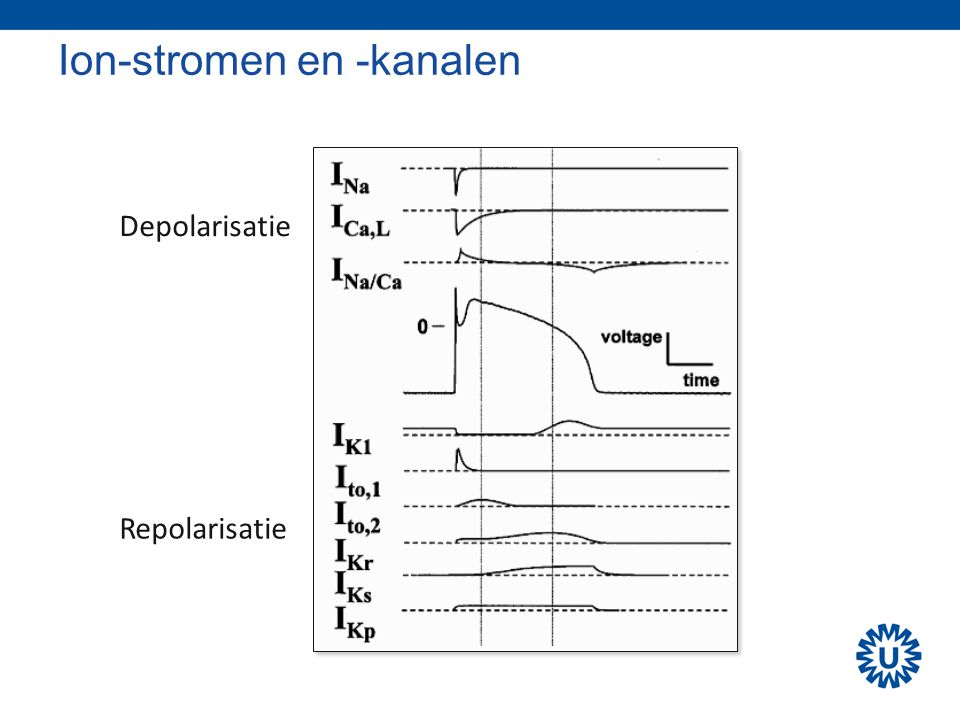 Ion-stromen en -kanalen