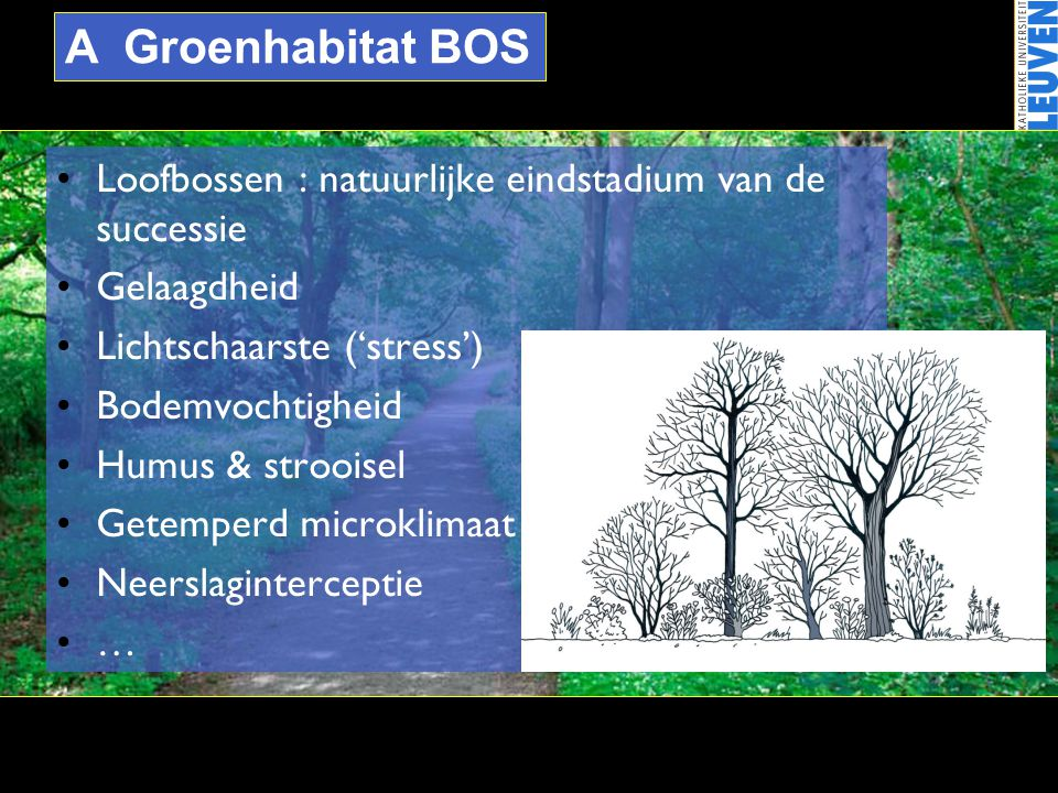 A Groenhabitat BOS Loofbossen : natuurlijke eindstadium van de successie. Gelaagdheid. Lichtschaarste ('stress')