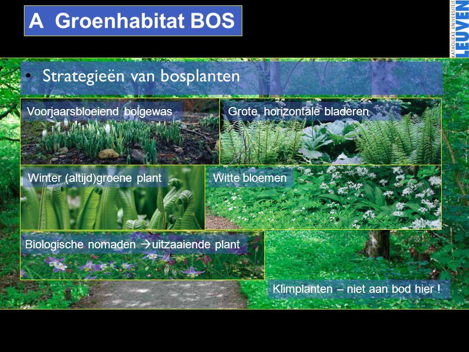A Groenhabitat BOS Strategieën van bosplanten
