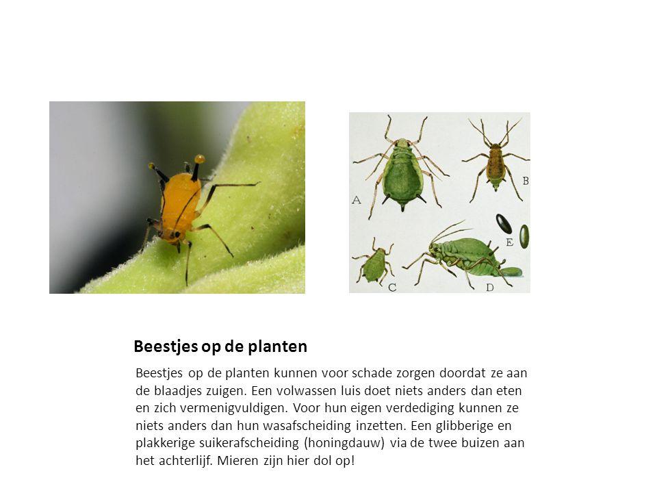 Beestjes op de planten