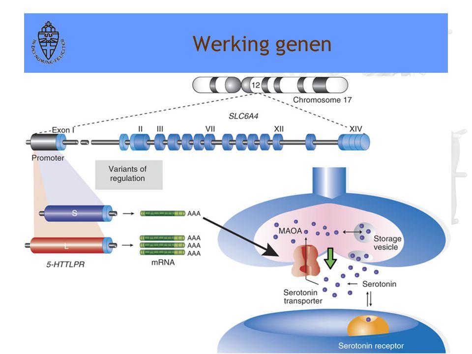 Werking genen Voorbeeld: Serotonine transporter gen (5-HTTLPR)