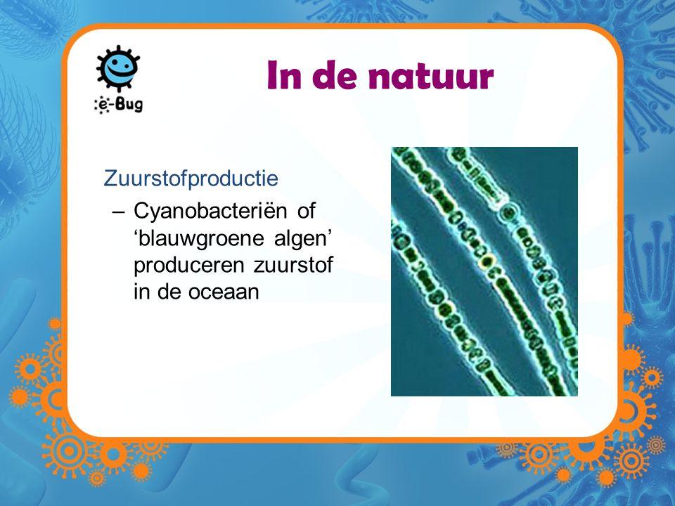 In de natuur Zuurstofproductie