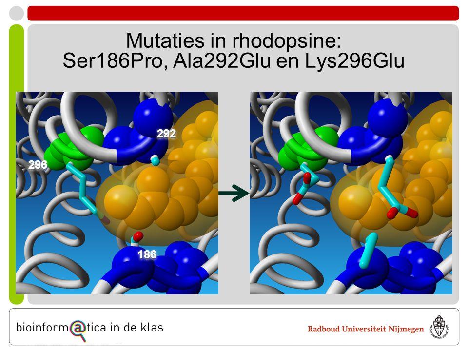 Mutaties in rhodopsine: Ser186Pro, Ala292Glu en Lys296Glu