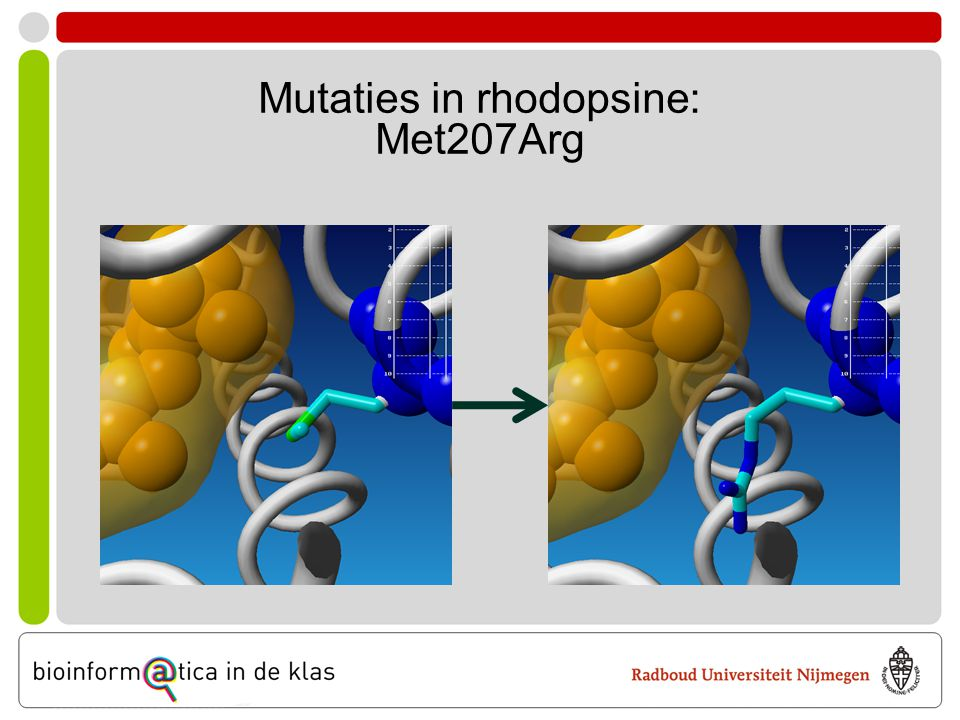 Mutaties in rhodopsine: Met207Arg