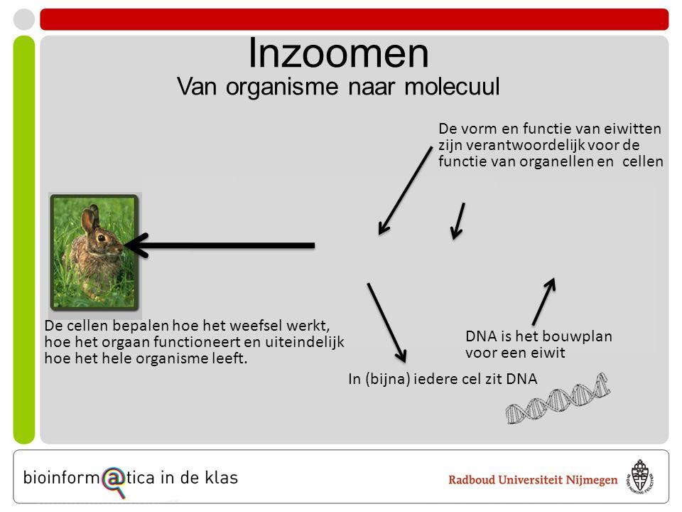 Inzoomen Van organisme naar molecuul