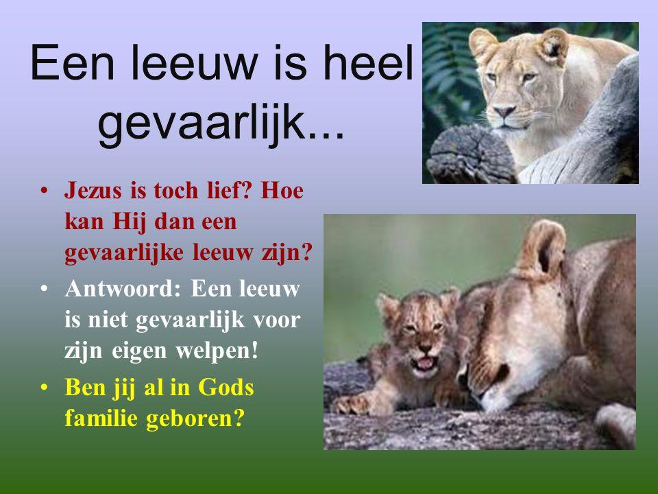 Een leeuw is heel gevaarlijk...